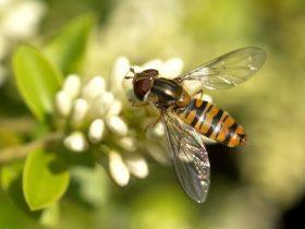 蜂胶可有效治疗四大类慢性疾病