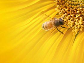 蜂胶的九大保健功效