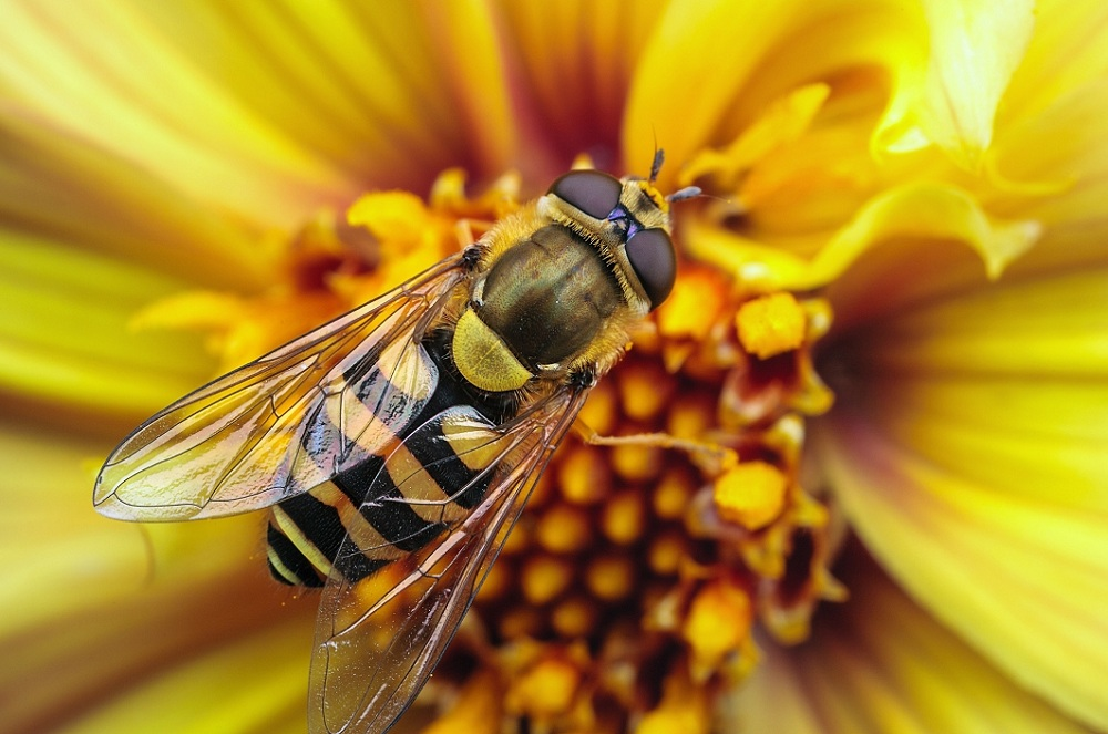 蜂胶和胰岛素