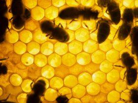 蜂胶治病保健使用大全