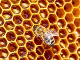 蜂胶,杀灭肝炎病毒,保护肝脏 !