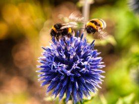 蜂胶被证明能够有效的减缓结肠大部分癌症的扩散