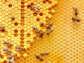 蜂胶有哪些副作用与禁忌?