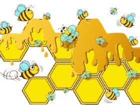 假蜂胶谁能识? 市民能变成识假专家吗?