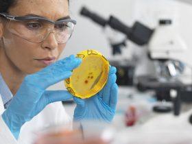 """蜂胶是""""一种典型的天然抗生素""""吗? 它""""会给人体造成严重损害吗?"""""""